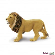 Angolischer Löwe