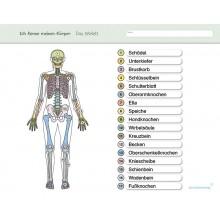 Ich kenne meinen Körper – Das Skelett