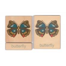 Klassifikation Körperbau Schmetterling